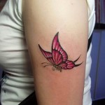 butterfly-picture-images-ideas